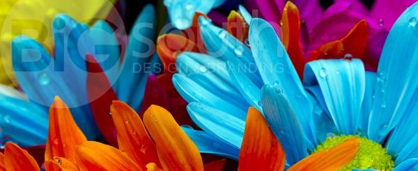 Màu sắc có ảnh hưởng đến thiết kế hệ thống nhận diện thương hiệu2